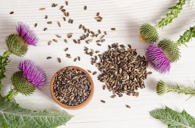 Milk Thistle Seeds and Flowers