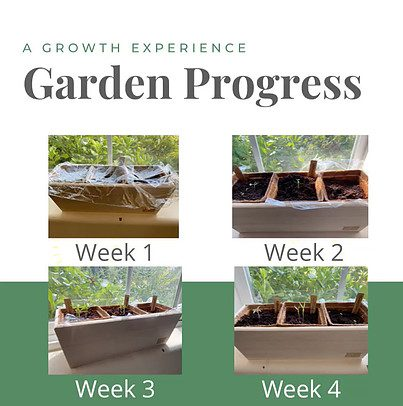 gardening for beginners-what to know - progress photo