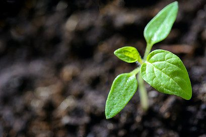 how to indoor garden - sprouting plant